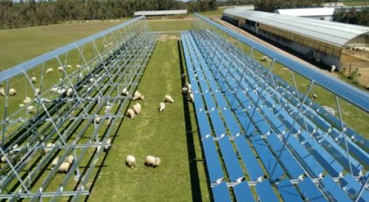 Italy: Solar Steam for Cheese Production